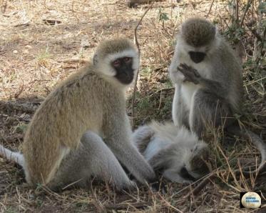 013-Monkeys