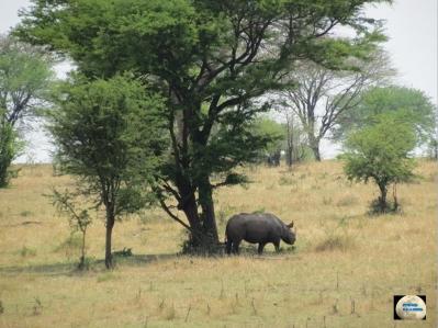 014-Rhino