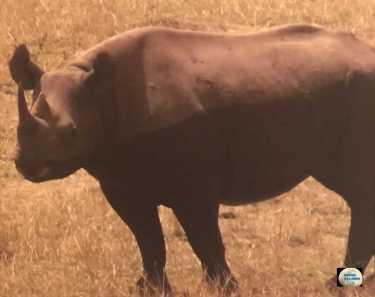 021 Rhino